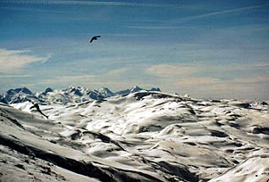 A bird soars overtop the snow-laden peaks near Zell Am See. Copyright Jim Johnson.