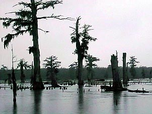 Louisiana swamps set a dramatic tone, even without their toothy inhabitants. Photo courtesy of Alligator Bayou Tours.