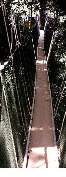 Copyright Margaret Deefholts. Taman Negara National Park's Canopy Walkway is the longest catwalk in the world.