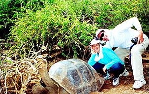 Paul and Judy managed to convince this Tortoise to hold still long enough for a picture. Copyright: Paul Ross.