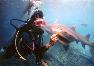 At the Curacao Aquarium, Sharon gets up close and very personal with a lemon shark. Copyright: Erwin Curial.